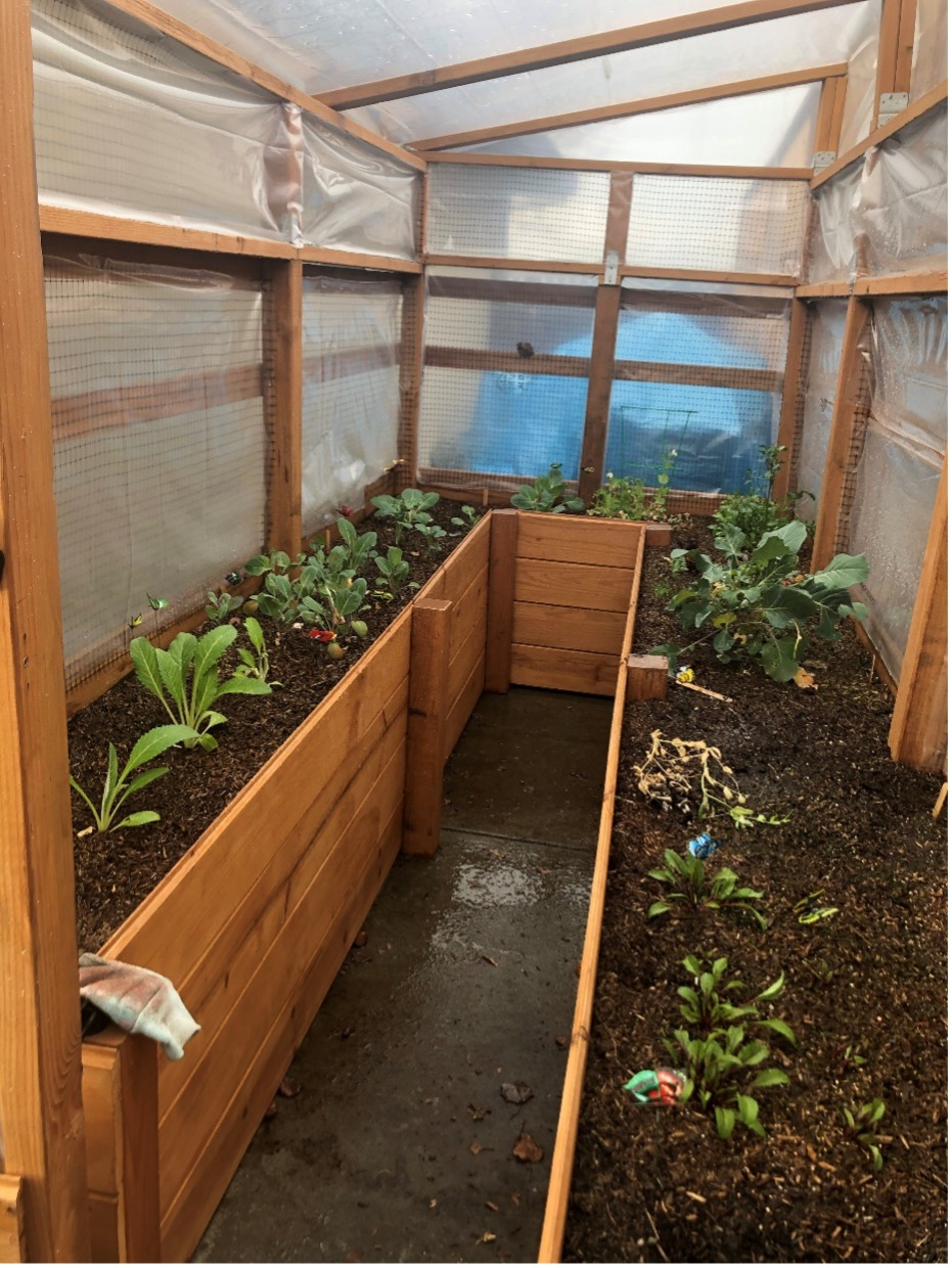 """Christina Larabell: """"[This] is a greenhouse my husband (Patrick) and I built in our backyard at the beginning of the summer when COVID hit us."""""""